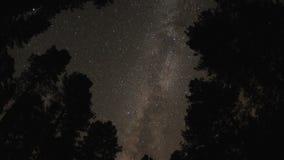 Gwiaździsty niebo przez drzewnego baldachimu zbiory