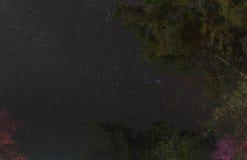 Gwiaździstej nocy ruchu niebo z drzewami Obrazy Royalty Free