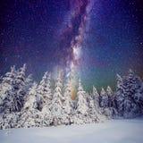 Gwiaździsty niebo i drzewa w hoarfrost Carpathians, Ukraina, Europa Obraz Stock