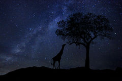 Gwiazda śladów Dojny sposób w Południowa Afryka nocnym niebie Obrazy Royalty Free
