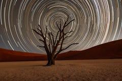 Gwiazda śladów okrąg nad camelthorn drzewem obraz royalty free