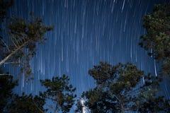 Gwiazda ślada w nocnym niebie z drzewem Fotografia Stock