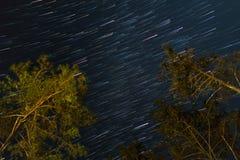 Gwiazda ślada z drzewem w nocnym niebie Obrazy Royalty Free