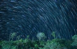 Gwiazda wlec w nocnym niebie z drzewem na górze Zdjęcia Royalty Free