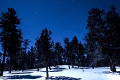 Gwiazda wypełniająca zimy noc Fotografia Royalty Free