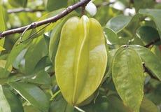 Gwiazdowa jabłczana Tajlandia tropikalna podprawy owoc Zdjęcia Royalty Free