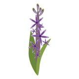 Gwiazdowego grona kwiatu ornament ilustracja wektor