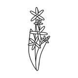 Gwiazdowego grona kwiatu ornamentu cienka linia royalty ilustracja