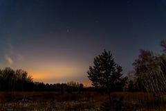 Gwiazdowego nieba lasowi drzewa Fotografia Stock