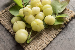 Gwiazdowy agrest Owoc z wysoką witaminy C zawartością Zdjęcie Stock
