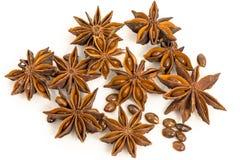 Gwiazdowy anyż. wysuszeni ziarna rośliny Pimpinella anisum L. obraz stock