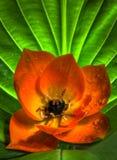 gwiazdowy kwiatu słońce Zdjęcia Royalty Free