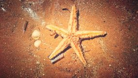 Gwiazdowy morze Obrazy Stock