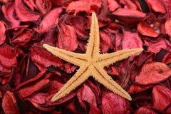Gwiazdowy Rybi dekoracja projekt na drewnianym czerwonym tle Fotografia Stock
