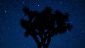 Gwiazdowy upływ Joshua drzewo zdjęcie wideo