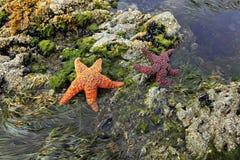 gwiazdy dwa Zdjęcia Royalty Free