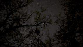 Gwiazdy przez drzewnych wierzchołków zbiory