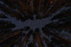 Gwiazdy w niebie przy nocą fotografia royalty free