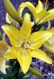 gwiezdny 2 żółty Obraz Royalty Free