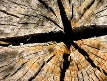 gwiezdny korzenia Obraz Stock
