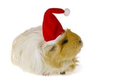 gwinei kapeluszu odosobniona świnia s Santa Zdjęcia Royalty Free