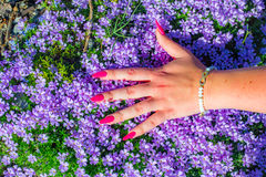 Gwoździe i kwiaty Zdjęcie Stock