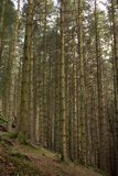 A deep forest hidden in the highlands of Scotland. stock photo