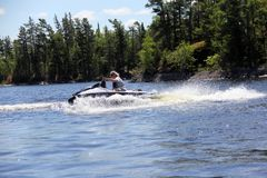 Gyckel på vattnet, sjö av träna, Kenora Ontario royaltyfri fotografi