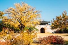 Gyeongbokgung pałac z jesieni ginkgo drzewem w Seul, Korea obrazy stock