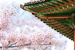 Gyeongbokgung Palace with cherry blossom in spring. Gyeongbokgung Palace with cherry blossom in spring,Korea stock image