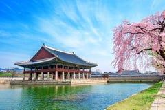 Gyeongbokgung Palace with cherry blossom in spring, Korea. stock photo