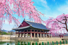 Gyeongbokgung Palace with cherry blossom in spring, Seoul in Kor Royalty Free Stock Photography