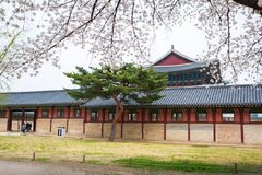 Gyeongbokgung palace with cherry blossom tree in spring time in Stock Photo