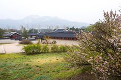 Gyeongbokgung palace with cherry blossom tree in spring time in Stock Photos