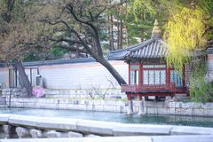 Gyeongbokgung palace with cherry blossom tree in spring time in Seoul city, South Korea royalty free stock photography