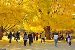 Gyeongbokgung Palace Grounds in Golden Autumn Foliage. Gyeongbokgung Palace Grounds, Seoul, South Korea with golden autumn foliage. Many visitors and tourist Stock Photos
