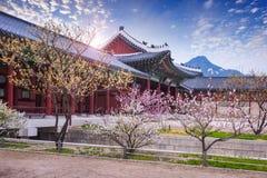 Gyeongbokgung palace in spring, South Korea. Gyeongbokgung palace in spring, South Korea royalty free stock photo