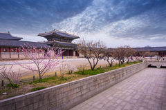 Gyeongbokgung palace in spring, South Korea. Royalty Free Stock Photography