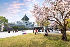 Gyeongbokgung slott med Cherry Blossom i vårloppet av Korea, April 10, 2016 i Seoul, Sydkorea Arkivbild