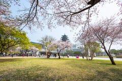 Gyeongbokgung slott med Cherry Blossom i vårloppet av Korea, April 10, 2016 i Seoul, Sydkorea Arkivfoto