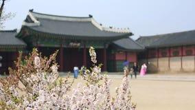 Gyeongbokgung slott med tr?det f?r k?rsb?rsr?d blomning i v?rtid i den seoul staden av Korea, Sydkorea arkivfilmer