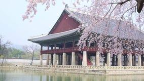 Gyeongbokgungpaleis met de boom van de kersenbloesem in de lentetijd in de stad van Seoel van Korea, Zuid-Korea stock videobeelden