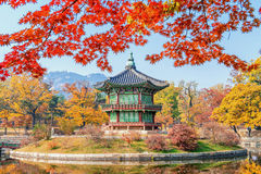 Gyeongbukgung and Maple tree in autumn in korea. Stock Image