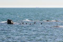 GYEONGJU, KOREA - OCTOBER 19, 2014: female divers called Haenyeo Stock Photography