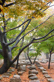 GYEONGJU KOREA - OKTOBER 20, 2014: Bunhwangsa Royaltyfria Bilder