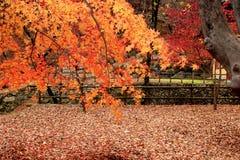 gyeryongsan εθνικό πάρκο της Κορέας Στοκ Φωτογραφία