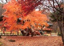 gyeryongsan korea nationalpark Arkivfoto