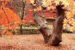 gyeryongsan parku narodowego Korei Obrazy Royalty Free