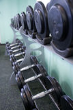 Gym equipment. Weight gym equipment in rack Stock Images