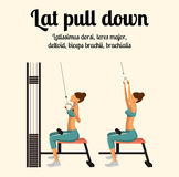Gym Exercise: Lat Pull Down. Vector Illustration Royalty Free Stock Photo